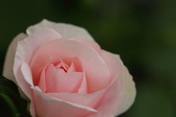 Florist&Gardener's ※てまり(Temari)