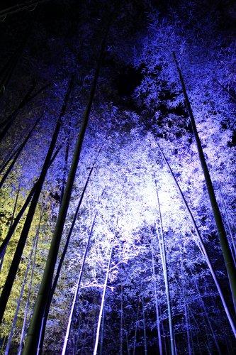 京都・嵐山花灯路 竹林 Arasiyama,Kyoto