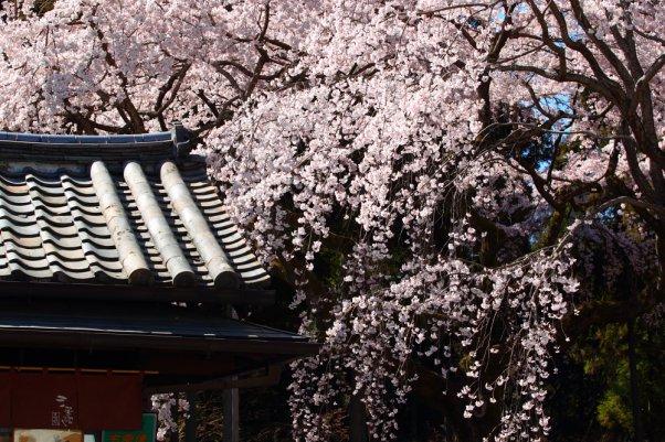 "醍醐寺 ""Daigoji"" Kyoto Japan"