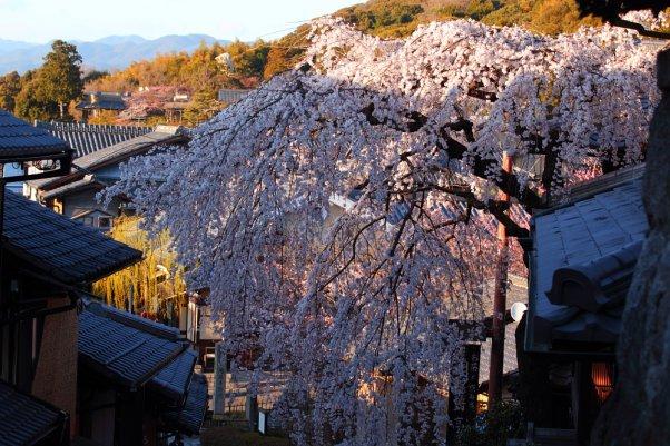 "京都 清水  ""Kiyomizu"" Kyoto Japan"