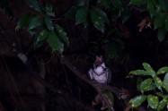 ヤマセミ Crested Kingfisher ※7D EF456 F5.6 ISO200 SS1/80