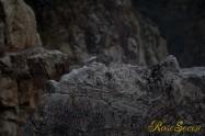 ヤマセミ Crested Kingfisher ※1D4 EF540 F4 ISO1000 SS1/320