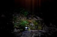 ヤマセミ Crested Kingfisher (MBL) ※1D4 EF540