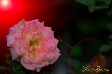 rose + LF