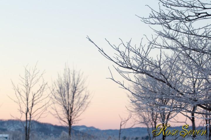 樹氷 朝焼け