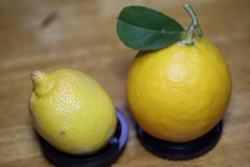 市販レモン(左)自家製レモン(右)