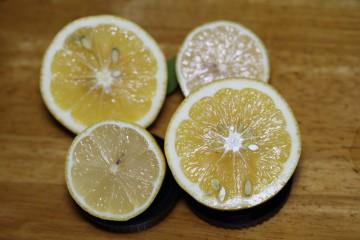 市販レモン(小)自家製レモン(大)