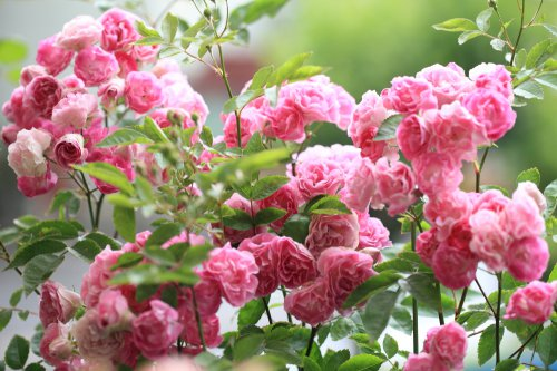 Florist & Gardener's