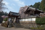 奈良 大野寺 しだれ桜