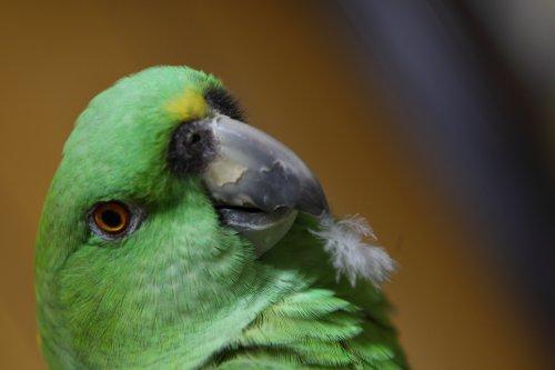 GW中の鳥達