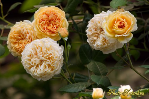 (ER) Crown Princess Margareta