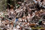 青い鳥 2012/WS