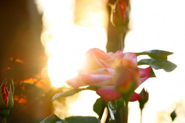トロピカルシャーベットと夕日