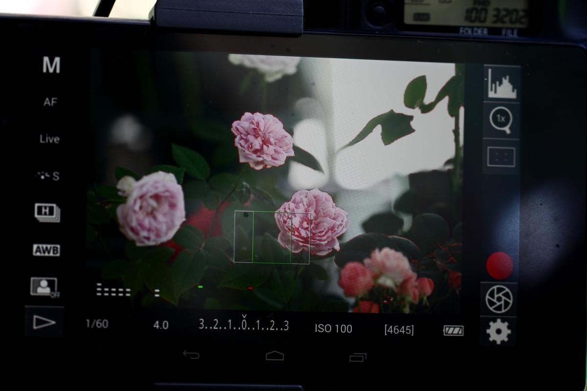 DSLR Controller Focus Peaking (Nexus7 2013)
