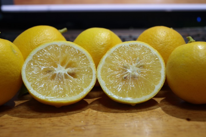 自家製レモン