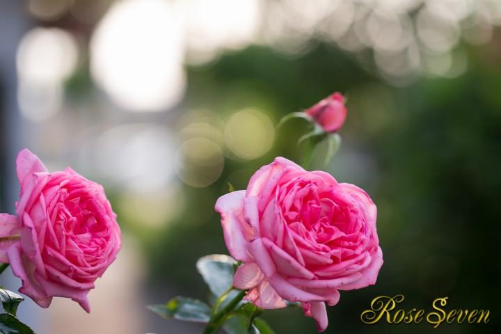 ラ ローズ ドゥ モリナール La Rose de Molinard